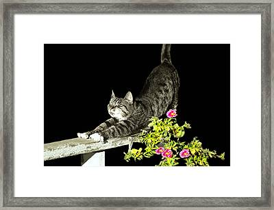 Bend And Stretch Framed Print by Diana Angstadt