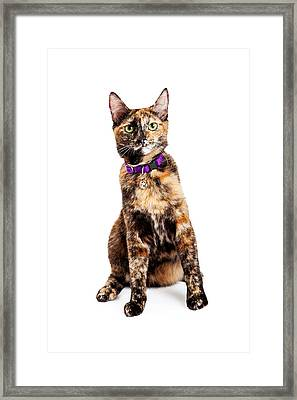 Bengal Kitty Cat Sitting Framed Print by Susan  Schmitz