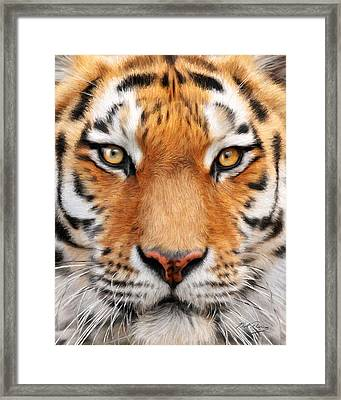 Bengal Tiger Framed Print by Bill Fleming