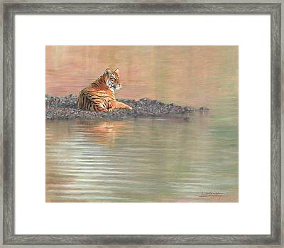 Bengal Tiger Framed Print by David Stribbling