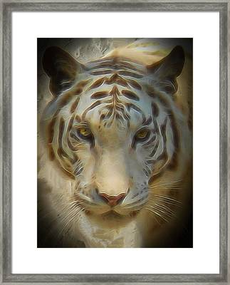Bengal Tiger On The Prowl Framed Print by Thom Zehrfeld
