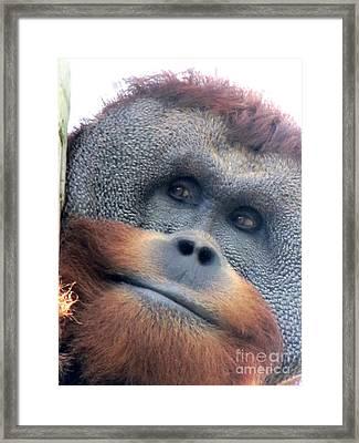 Berani Framed Print by Pamela Iris Harden