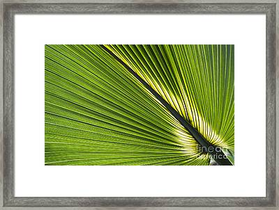 Bermuda Palmetto Leaf Framed Print by Tim Gainey