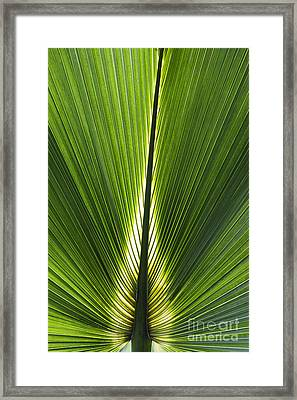 Bermuda Palmetto Palm Leaf Framed Print by Tim Gainey