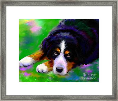 Bernese Mountain Dog Portrait Print Framed Print by Svetlana Novikova