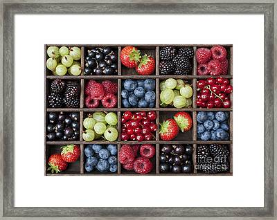 Berry Harvest Framed Print by Tim Gainey