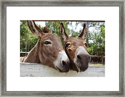 Best Buddies 2 Framed Print by Wibada Photo
