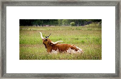 Best Friends - Texas Longhorn Magpie Framed Print by TL Mair
