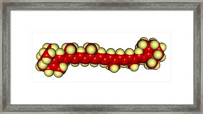 Beta-carotene Molecular Model Framed Print by Scimat