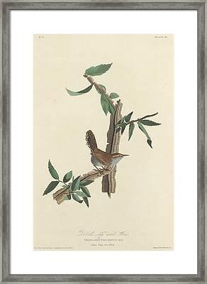 Bewick's Long-tailed Wren Framed Print by John James Audubon