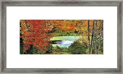 Beyond The Birch Pathway Framed Print by Kristin Elmquist