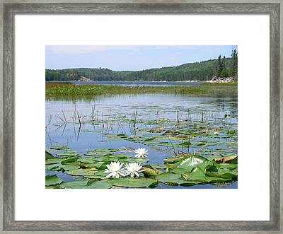 Beyond The Lilly Pads Framed Print by Peter  McIntosh