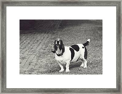 Big Barker Framed Print by Toni Hopper