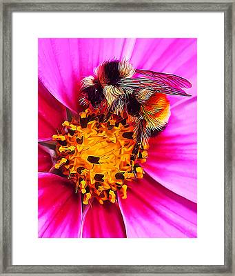 Big Bumble On Pink Framed Print by Bill Caldwell -        ABeautifulSky Photography