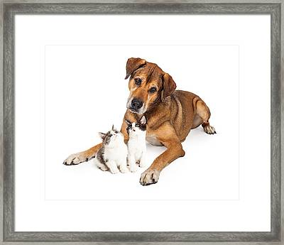 Big Dog Looking Down At Kittens Framed Print by Susan Schmitz