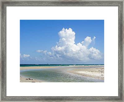 Big Florida Cotton  Framed Print by Jack Norton