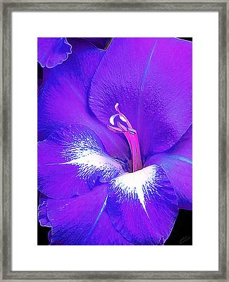 Big Glad In Purple And Blue Framed Print by Bill Caldwell -        ABeautifulSky Photography