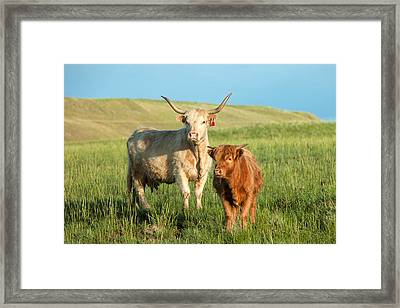 Big Horn, Little Horn Framed Print by Todd Klassy