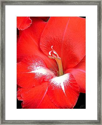 Big Red Framed Print by Bill Caldwell -        ABeautifulSky Photography
