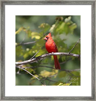 Big Red Framed Print by Robert Pearson