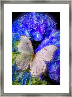 Big White Butterfly Framed Print by Garry Gay