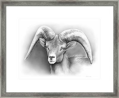 Bighorn Ram Framed Print by Greg Joens