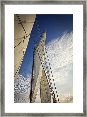 Biloxi Schooner Sailing Framed Print by Joan McCool