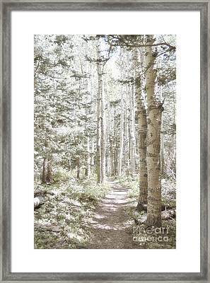 Birch Path Woodland Framed Print by Andrea Hazel Ihlefeld