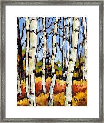 Birch Study By Prankearts Framed Print by Richard T Pranke