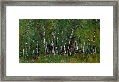 Birch Tree Panorama Framed Print by David Patterson