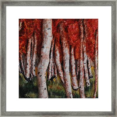 Birch Trees In Autumn Framed Print by Alison  Galvan