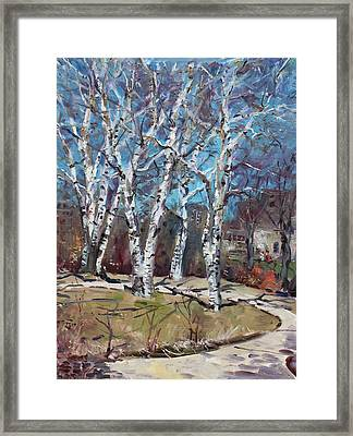 Birch Trees Next Door Framed Print by Ylli Haruni