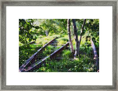 Birch Trees Of High Line Park Framed Print by George Oze