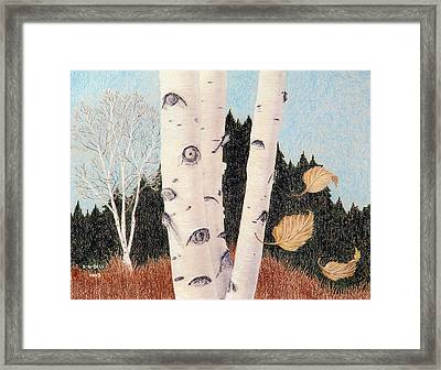 Birches Framed Print by Betsy Gray Bell