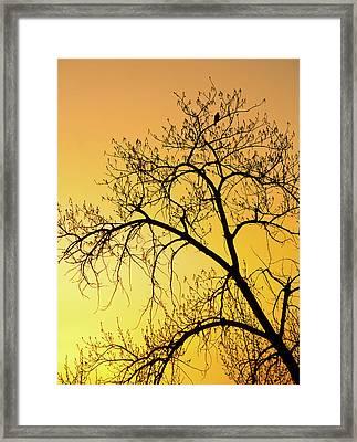 Bird At Sunset Framed Print by James Steele