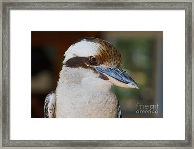 Bird Of Prey Framed Print by A New Focus Photography
