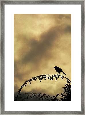 Bird On Branch Montage Framed Print by Dave Gordon