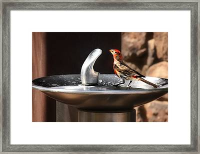 Bird Spa Framed Print by Christine Till