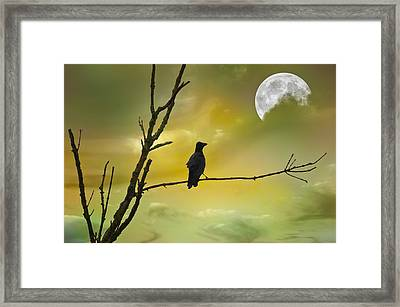 Bird Watching Framed Print by Steven  Michael