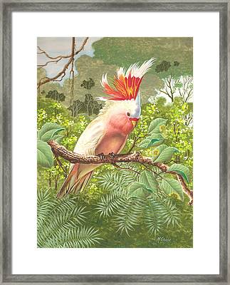 Cakatoo Framed Print by Laura Greco