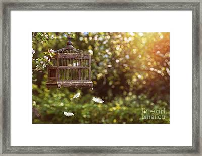 Birdcage In Spring Framed Print by Amanda And Christopher Elwell