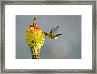 Birds And Bees Framed Print by Mike  Dawson