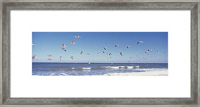 Birds Flying Over The Sea, Flagler Framed Print by Panoramic Images