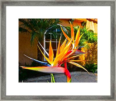 Birds In Paradise Framed Print by Gwyn Newcombe