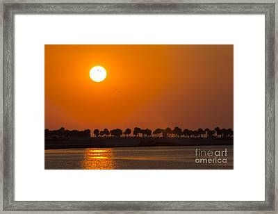 Birds In The Sun Framed Print by Marvin Spates