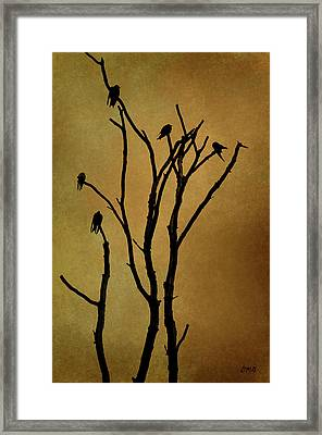 Birds In Tree Framed Print by Dave Gordon
