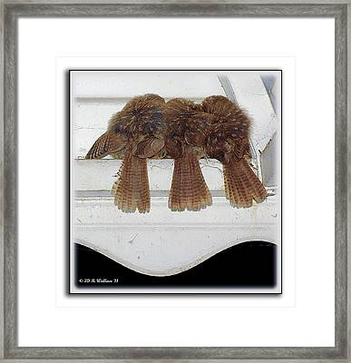 Birds Of A Feather Framed Print by Brian Wallace