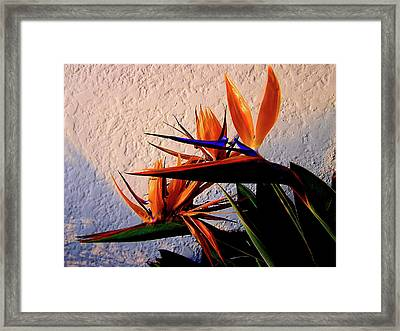 Birds Of A Feather Framed Print by Michael Durst