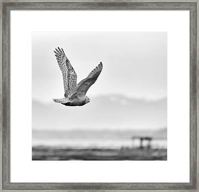 Birds Of Bc - No.16 - Snowy Owl - Bubo Scandiacus Framed Print by Paul W Sharpe Aka Wizard of Wonders