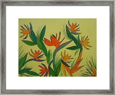 Birds Of Paradise Framed Print by Elizabeth Ribet
